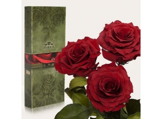 Три долгосвежих розы Багровый Гранат в подарочной упаковке фото