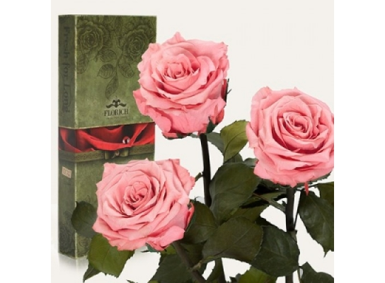 Три долгосвежих розы Розовый Кварц в подарочной упаковке фото