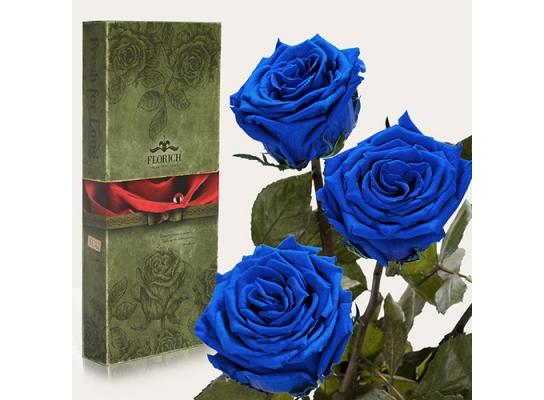 Три долгосвежих розы Синий Сапфир в подарочной упаковке фото