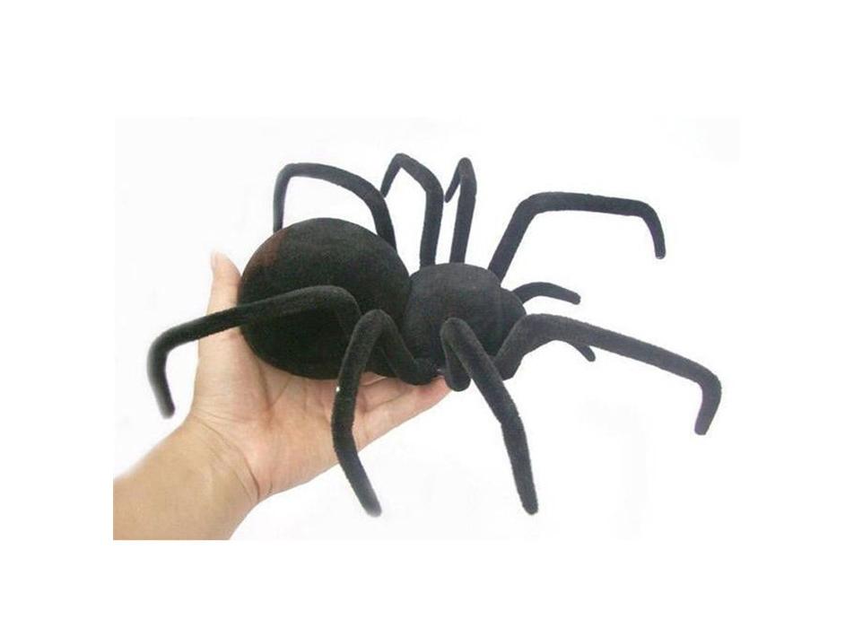 жиросжигатель черная вдова black spider купить